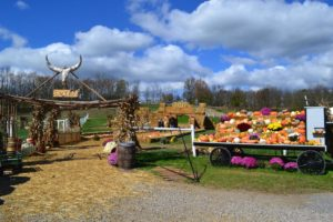 Fall Festival at The Farm at Walnut Creek