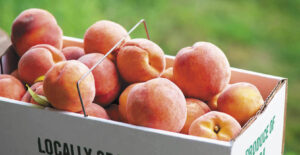 Hillcrest Orchard Peaches